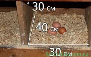 содержание куриц несушек