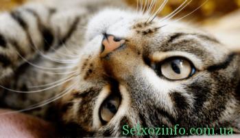 Приют Макса Полякова для бездомных котов